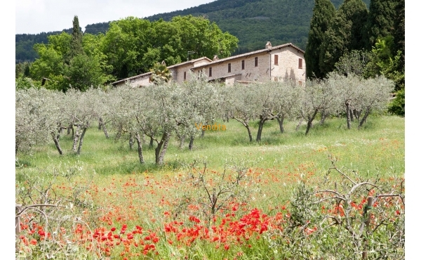 Casale ad Assisi